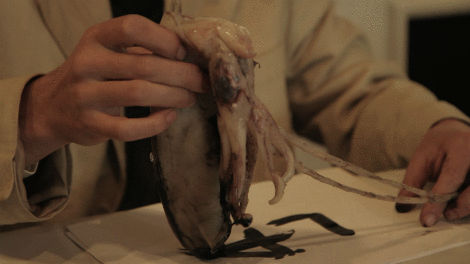 Image of A still from Laure Prouvost's The Wanderer