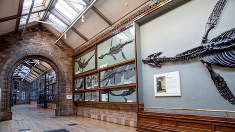 Image of Location Natural History Museum