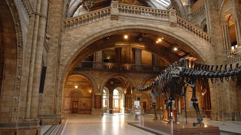 interior shot of the Natural History Museum main hall