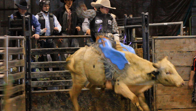 Image of A Cowboy Invited me to Watch Him Bull Ride, Roz Mortimer